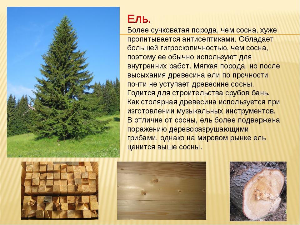 Лучшее дерево для строительства бани