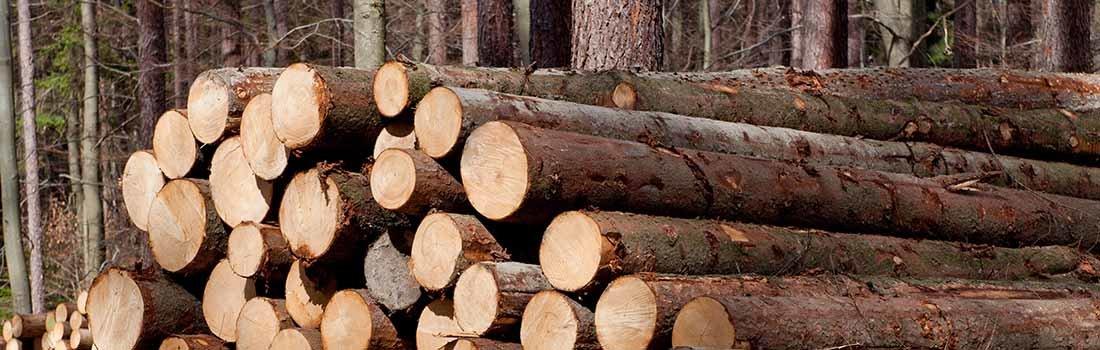 Делать полки из абаша или осины? обзор свойств дерева для полков – от породы до формы распила