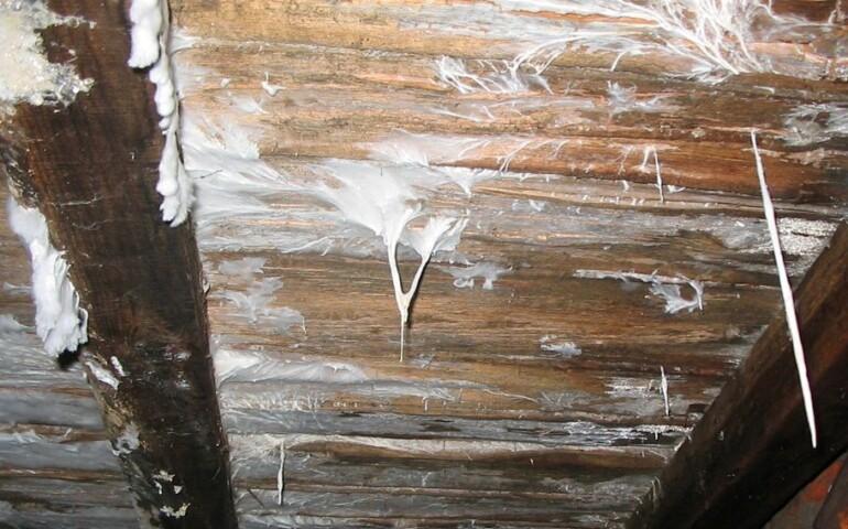 Грибок в подполье деревянного дома как избавиться фото и видео
