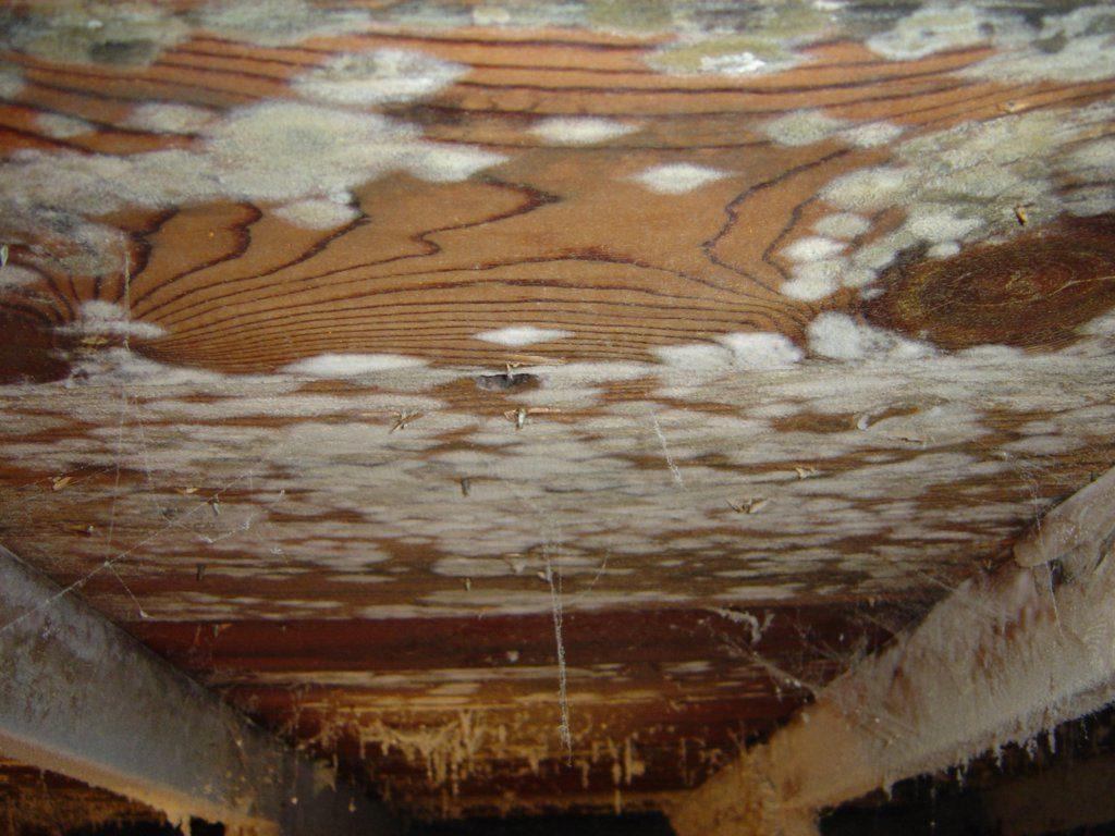 Как вывести грибок в бане – убираем плесень с деревянных поверхностей, обработка досок