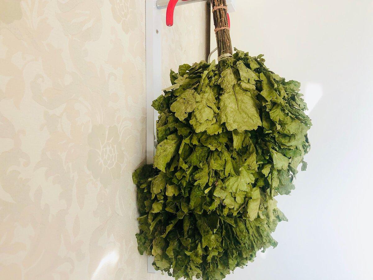 Веники для бани: заготовка, сушка