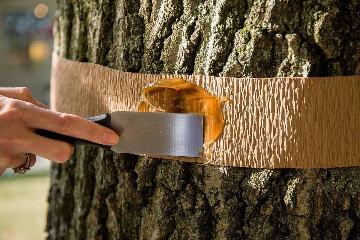 Средства для самостоятельной защиты древесины от негативного влияния насекомых, влаги и гниения.
