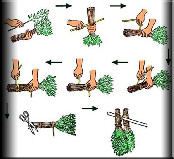 Как правильно сушить березовые веники