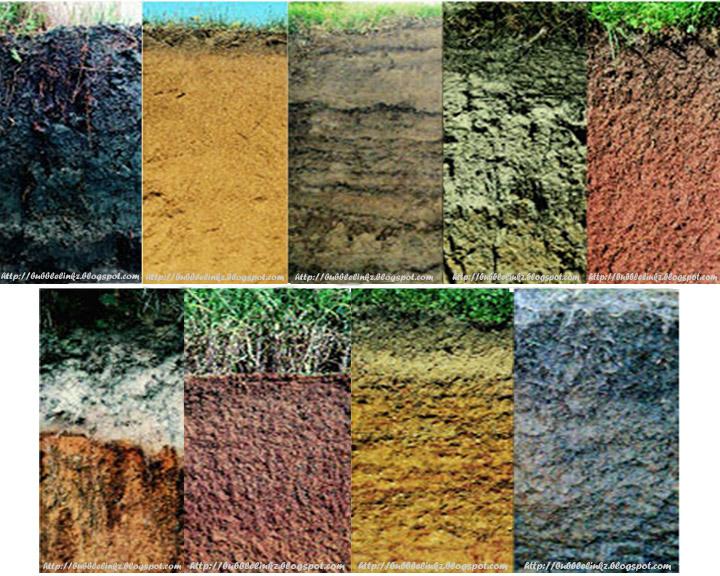 Виды почв: фото, видео, какие бывают почвы, как определить состав почвы
