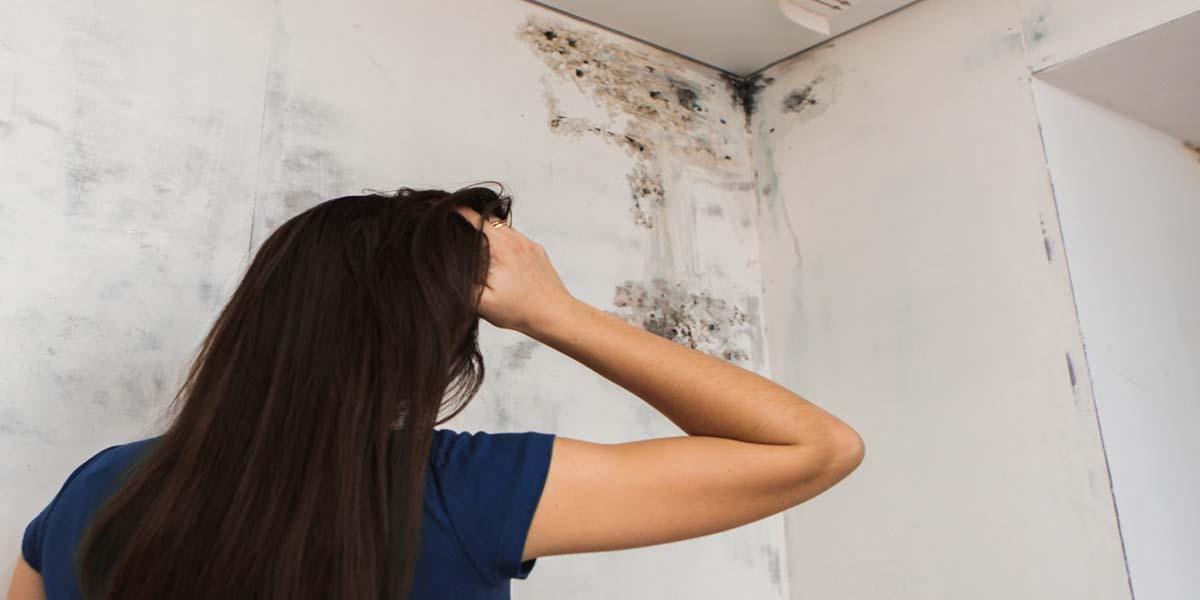 Плесень на стене в квартире: что делать и как избавиться?
