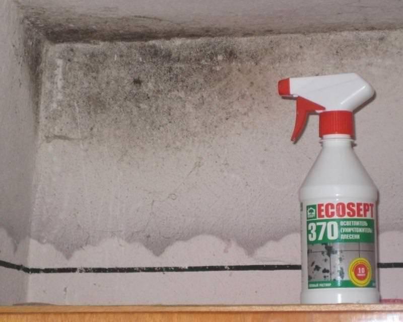 Как избавиться от плесени на стенах в квартире навсегда?
