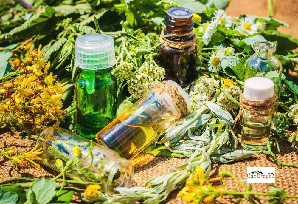 Травы для бани, их полезные свойства и применение