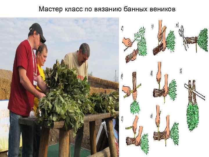 Заготавливаем дубовые веники. правильный дубовый веник для бани. когда и как дубовый веник вязать, сушить, запарить