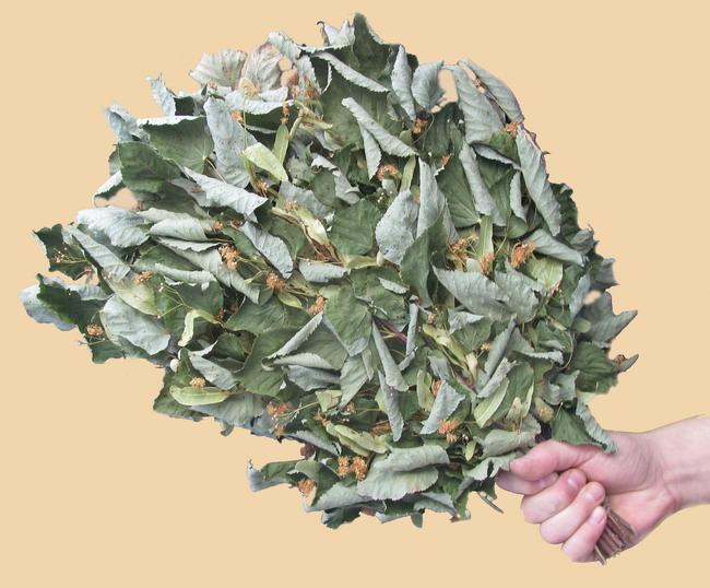 Способы применения и принципы изготовления кленовых веников для бани