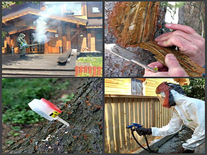 Как защитить древесину от гниения, возгорания, влаги, ультрафиолета