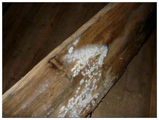Как убрать грибок в бане: средства для уничтожения плесени