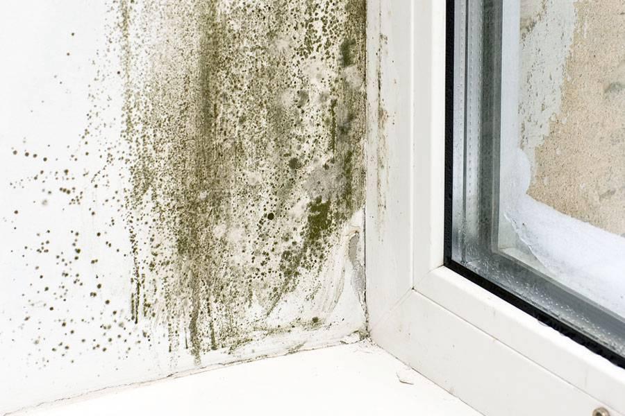 Как вывести плесень и грибок на стенах в квартире? как вывести плесень со стен в квартире народными или специальными средствами?