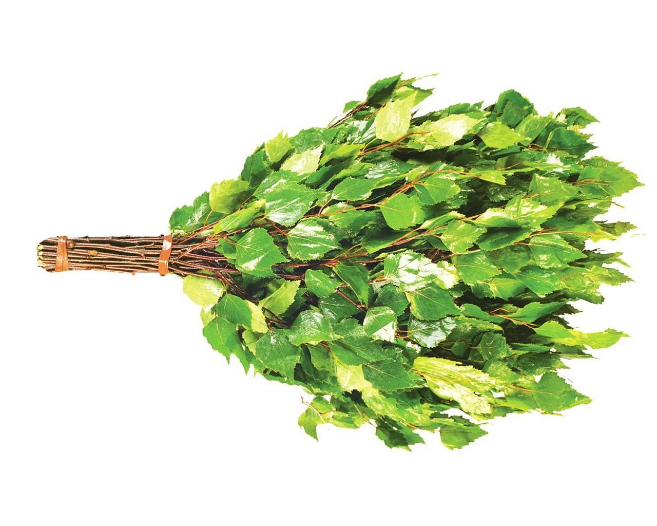 Заготовка дубовых веников для бани: сроки, как правильно резать и сушить изделие