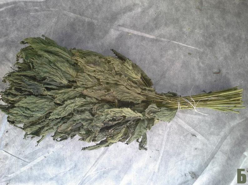Как сделать веник для бани из крапивы?