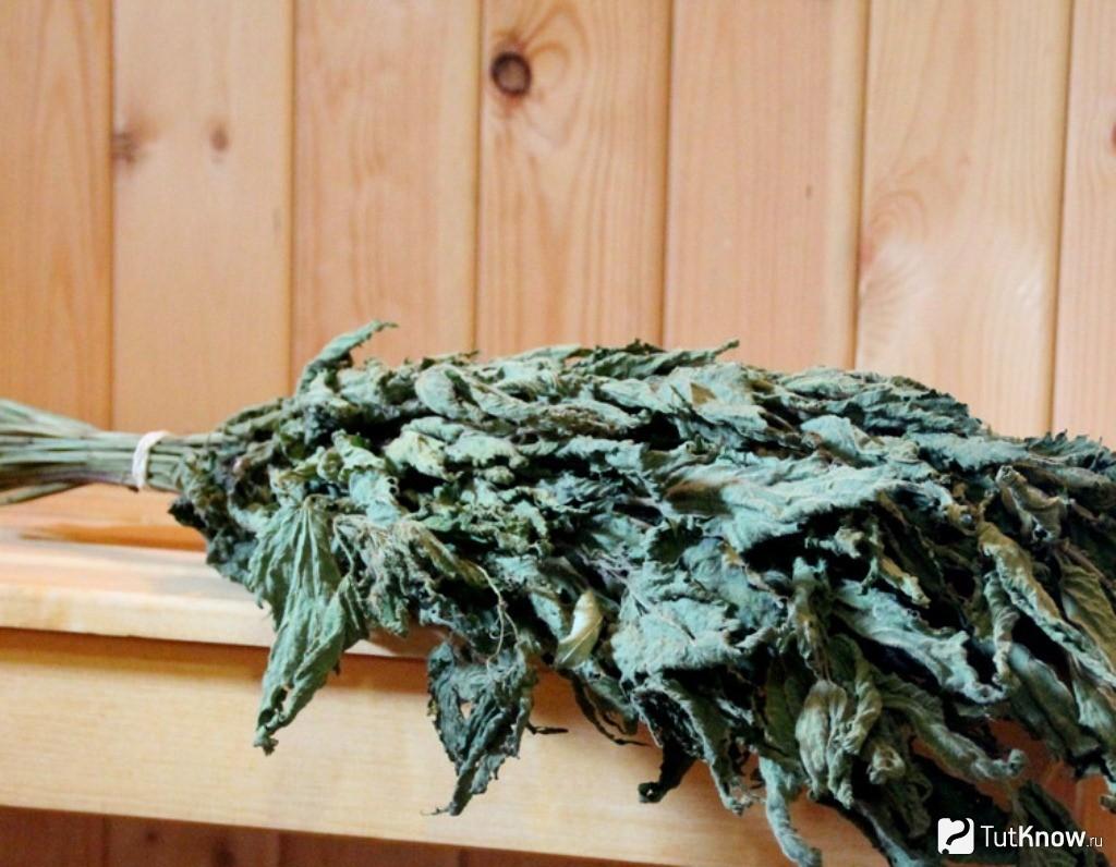 Веник из крапивы лечебные свойства и противопоказания