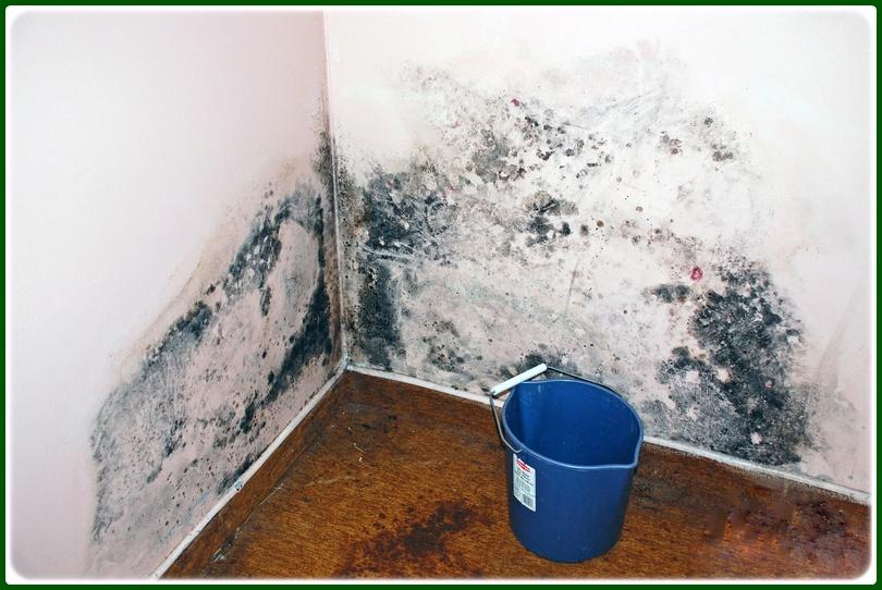 Полезные советы, как можно убрать всю плесень и грибок со стен в квартире