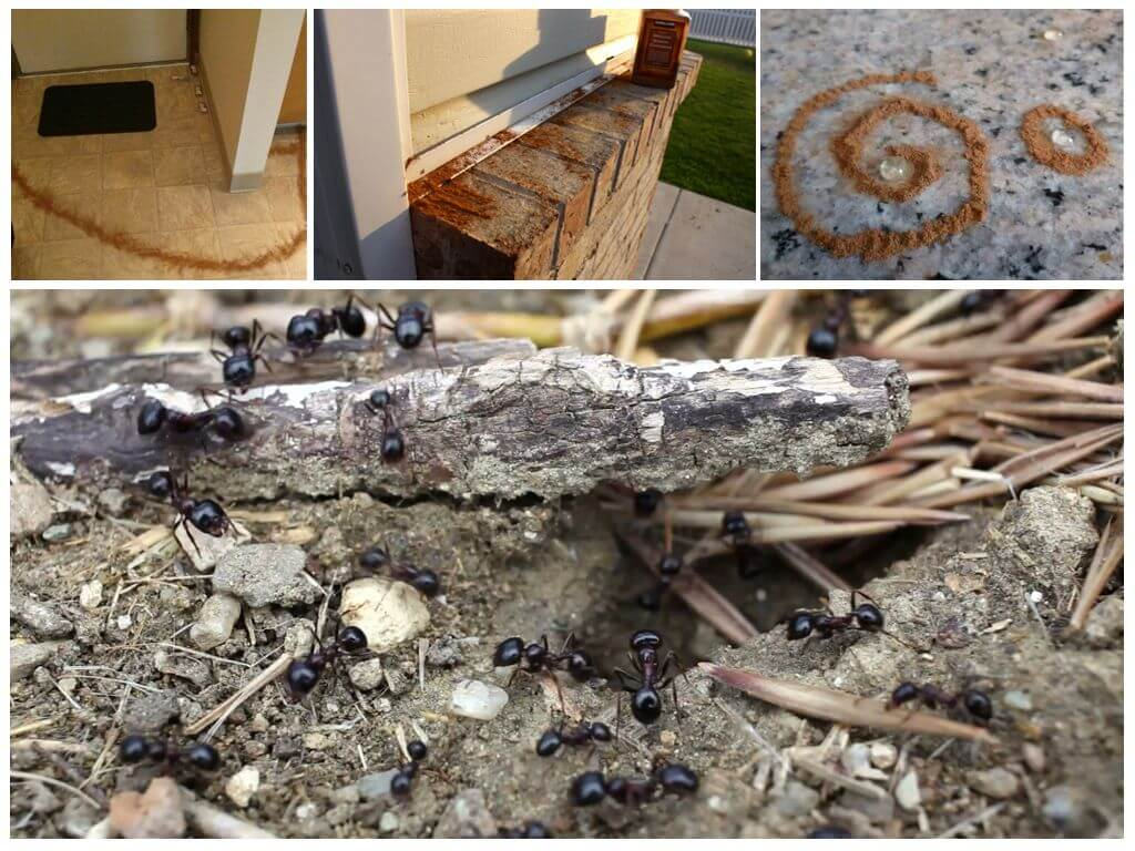 5 способов избавиться от муравьев в бане в домашних условиях