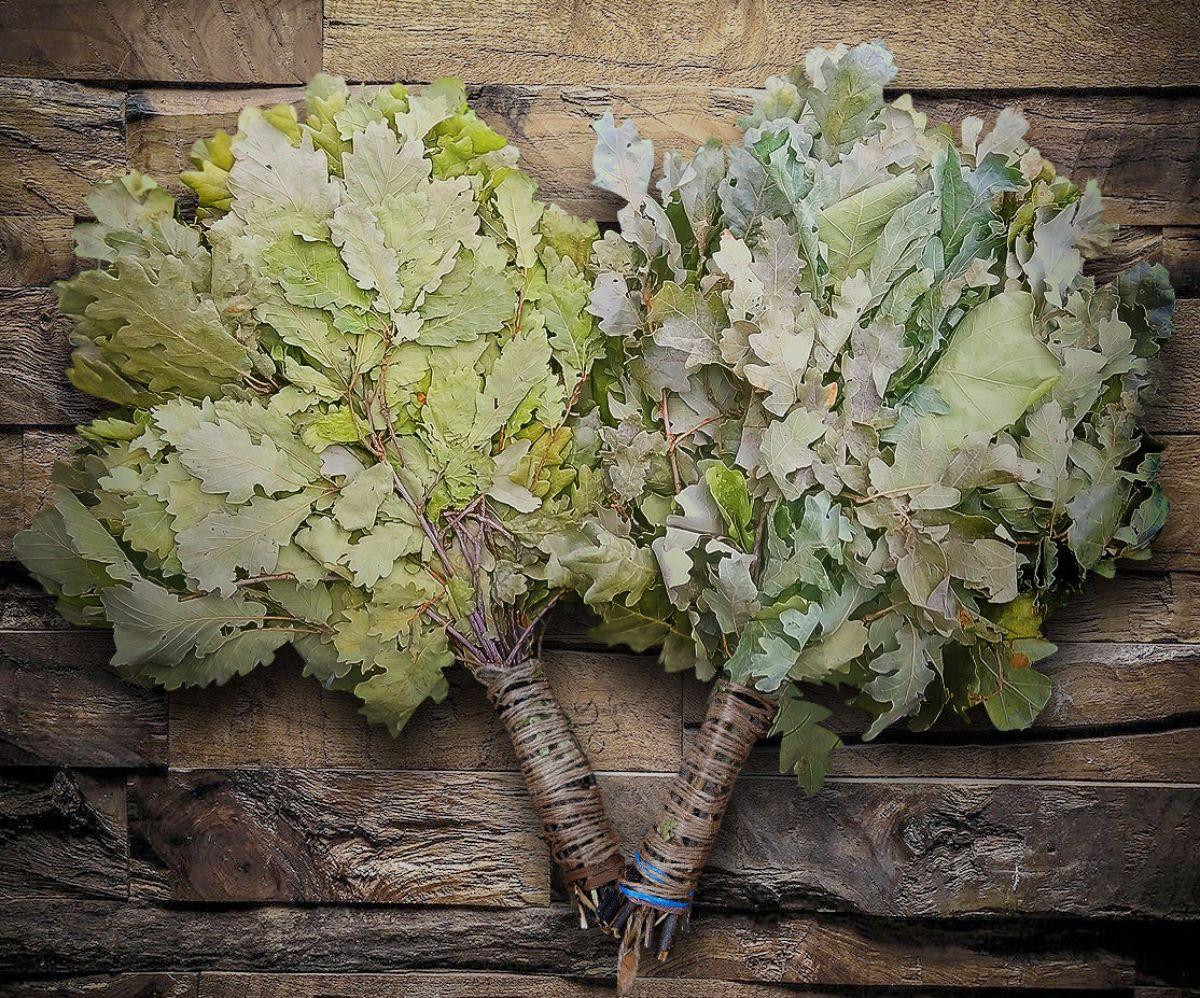 Дубовые веники (23 фото): польза и вред веников для бани, из канадского дуба и другого, время заготовки, как хранить и сушить