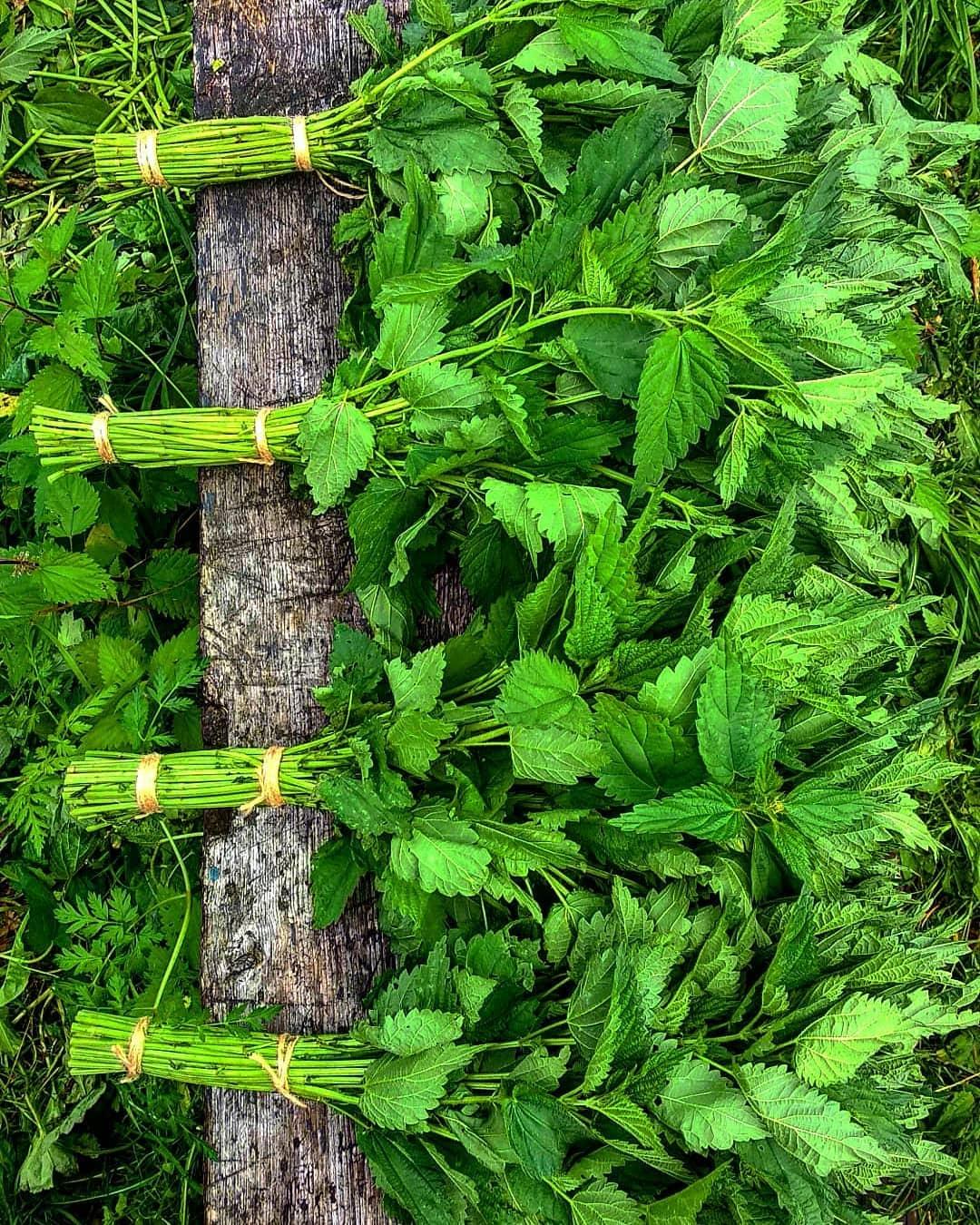 Веник из крапивы для бани