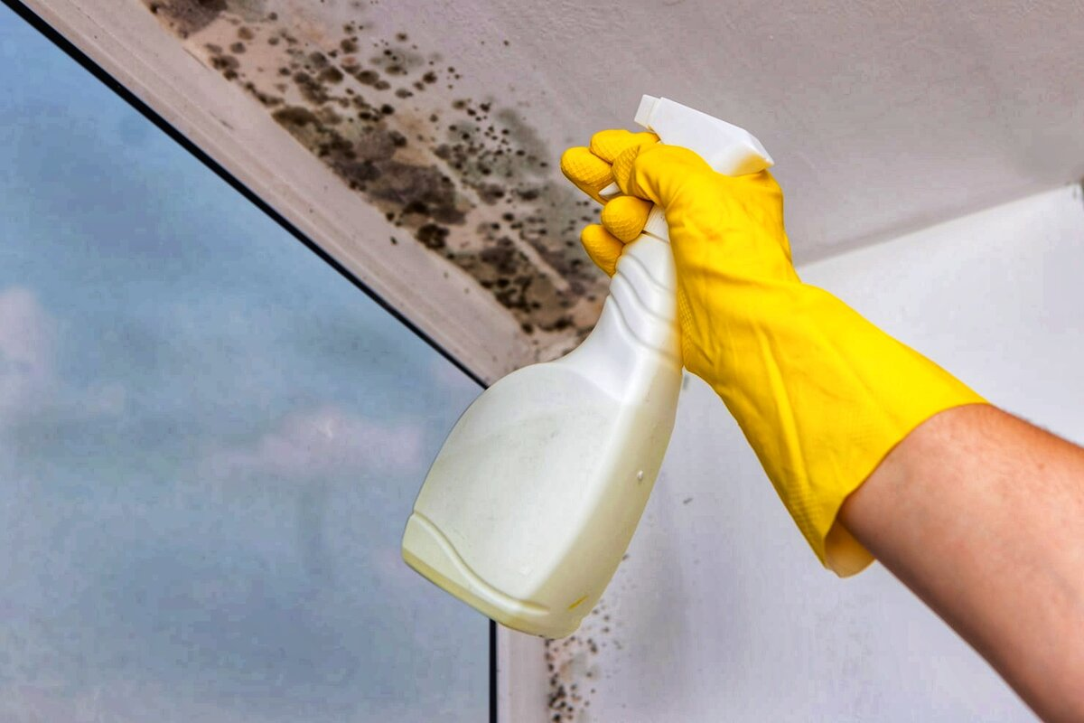 Как избавиться от плесени и грибка на стенах в квартире или доме