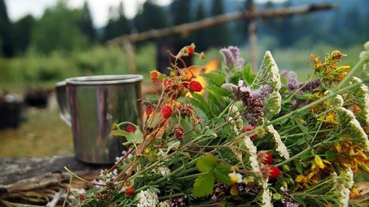 Травы для бани в пучках