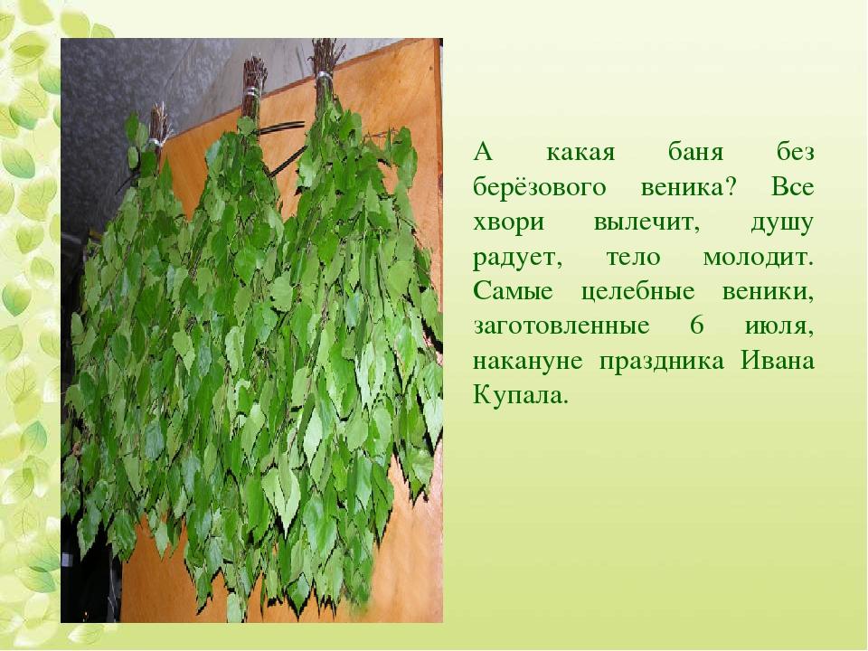 Как правильно сушить березовые веники для бани - читайте тут