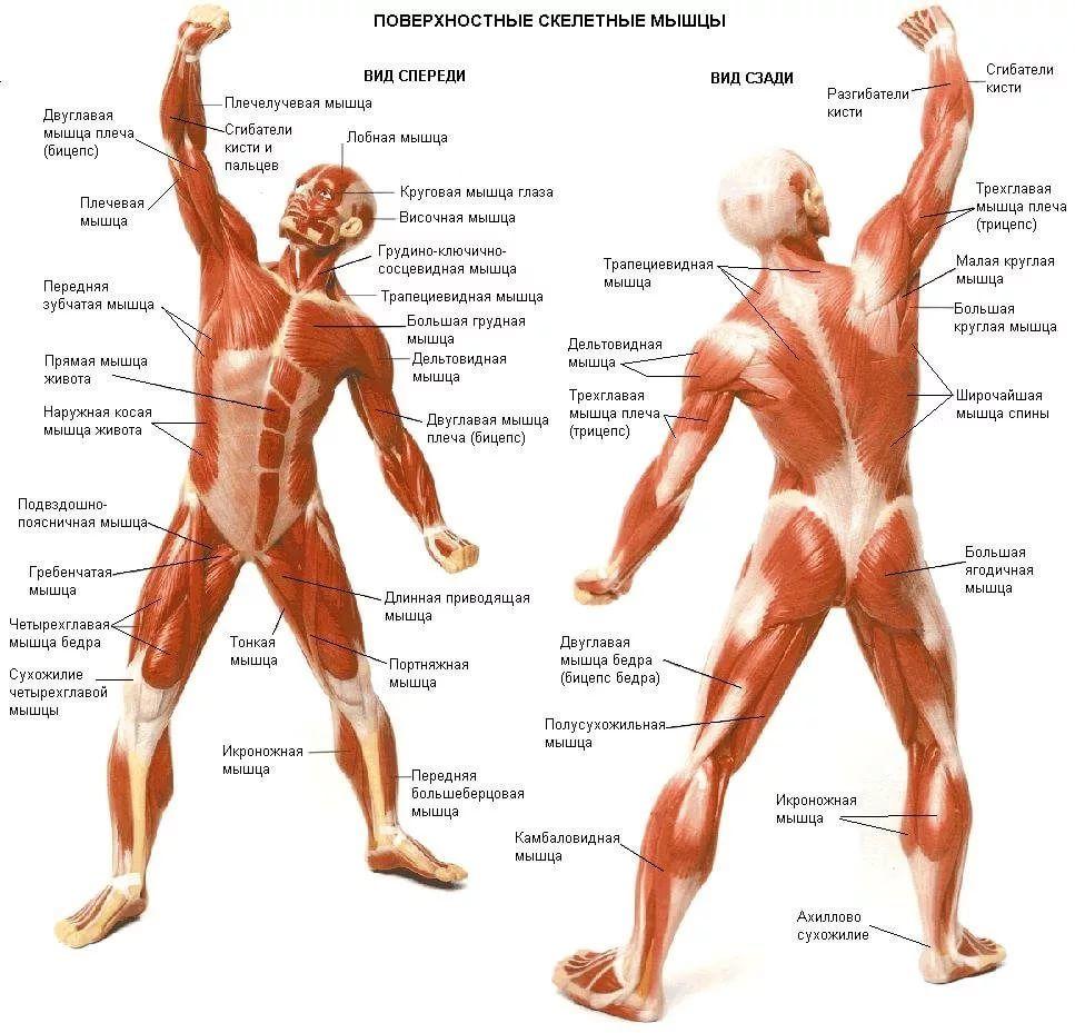 Как влияет баня на мышцы