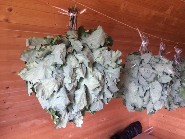 Заготовка березовых веников для бани