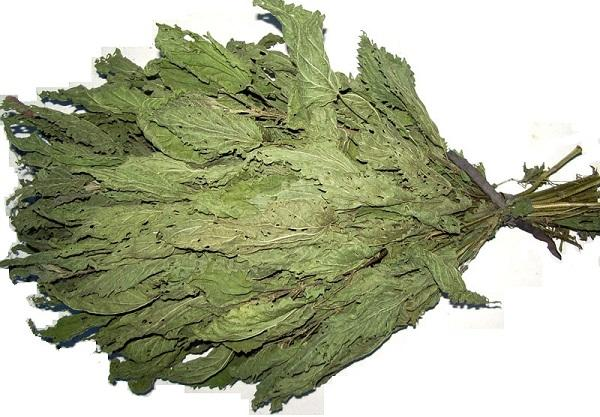 Веник из крапивы для бани - его полезные свойства