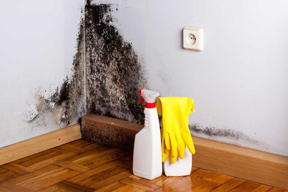 Как бороться с плесенью: эффективные способы уничтожения и выведения / как избавится от насекомых в квартире