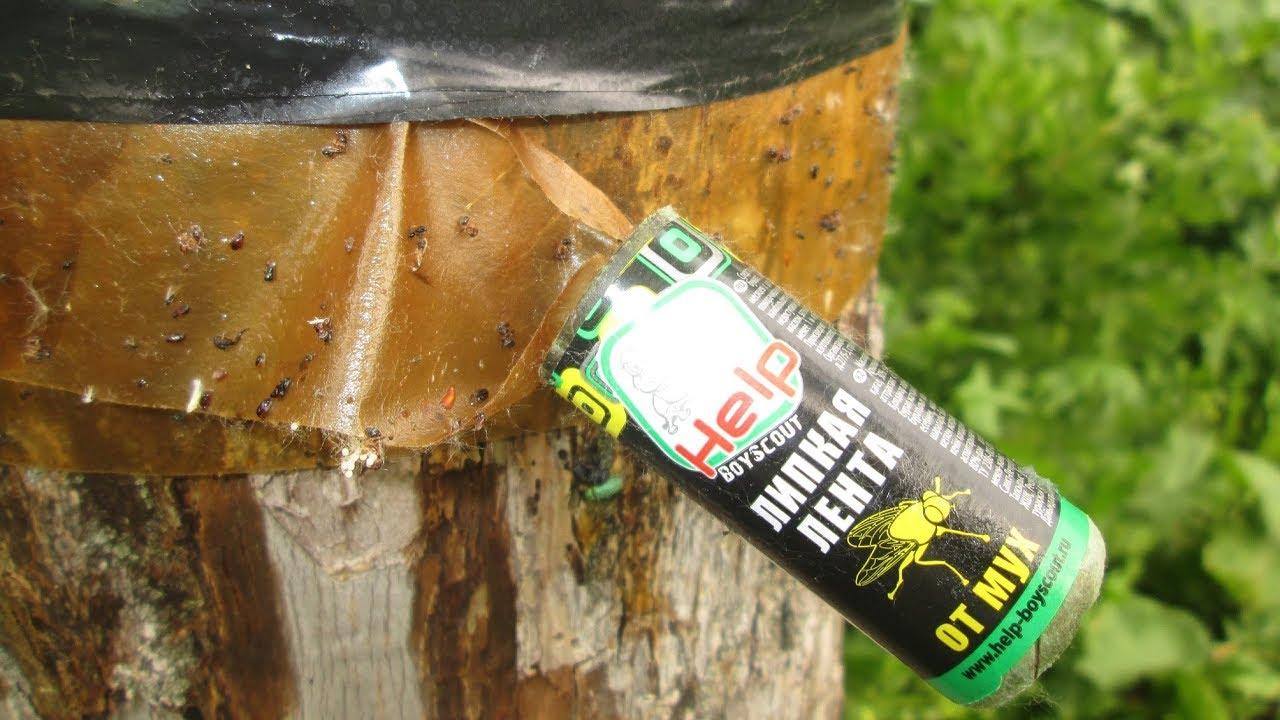 Вредители древесины: народные, химические способы борьбы с ними