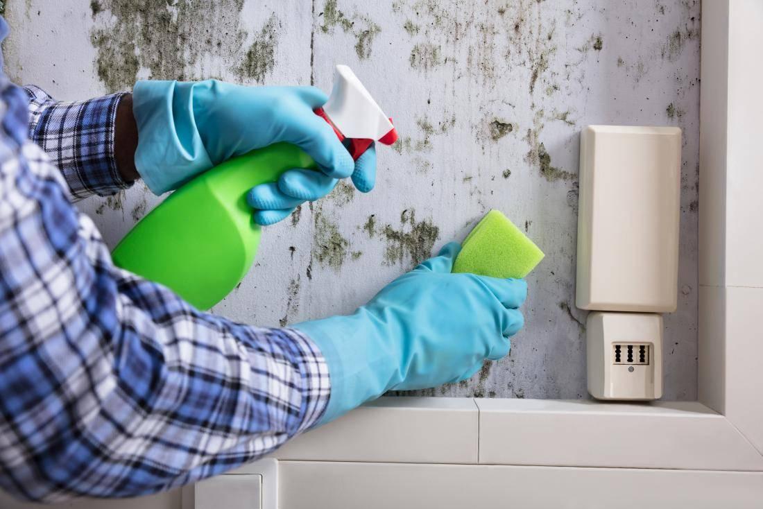 Как избавиться от плесени в квартире. средства для удаления плесени