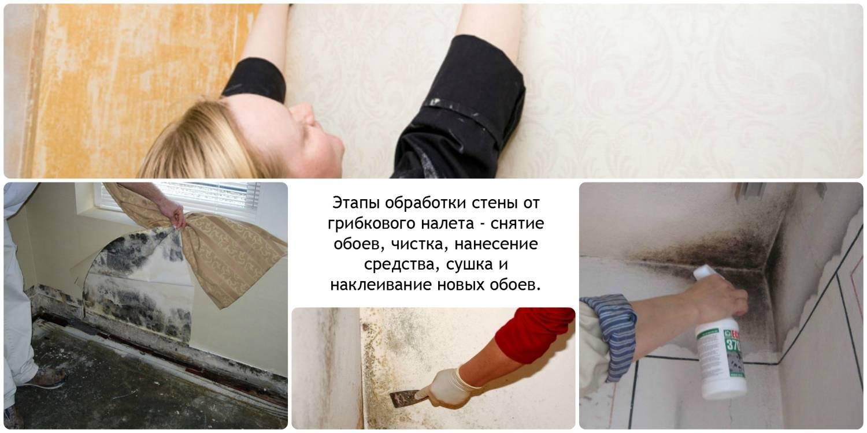 Обработка стен от плесени и грибка в квартире