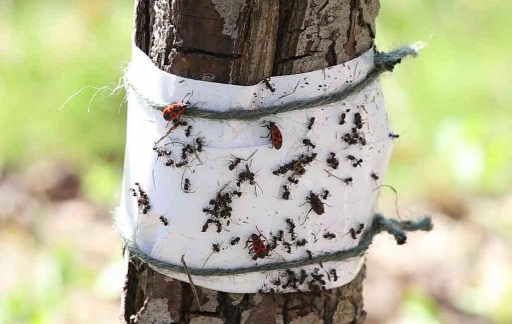 Чем обработать дерево от плесени, грибка — как выбрать надежное средство защиты