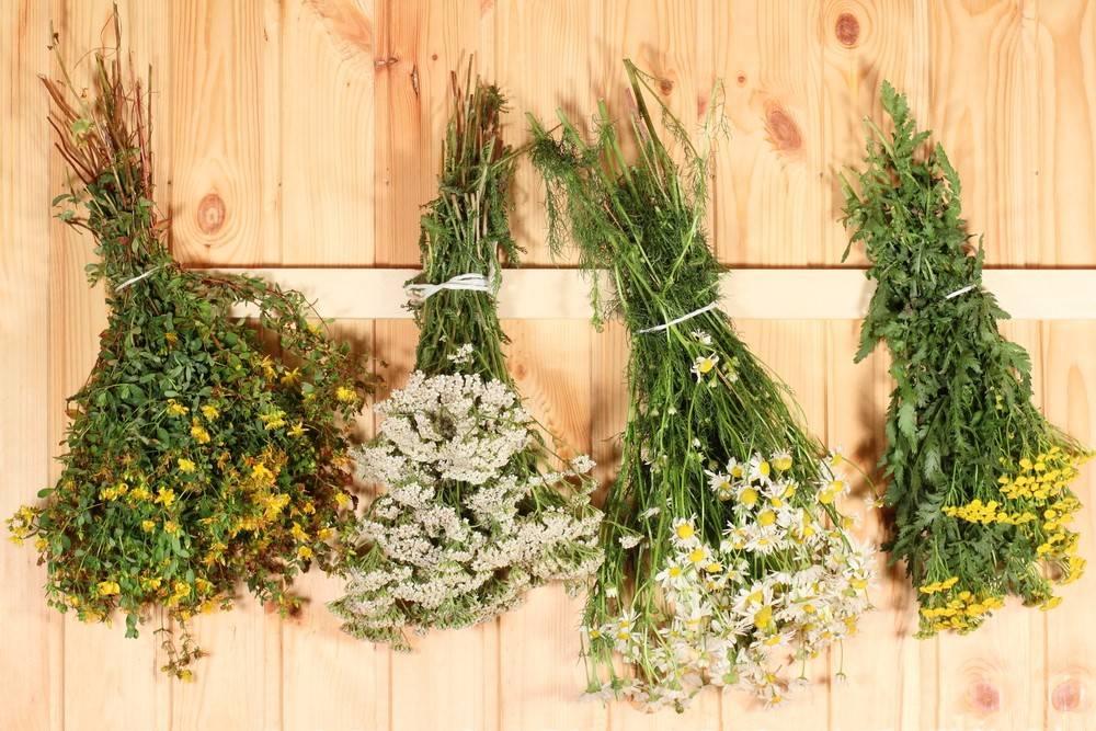 Травы для бани: полезные свойства и применение