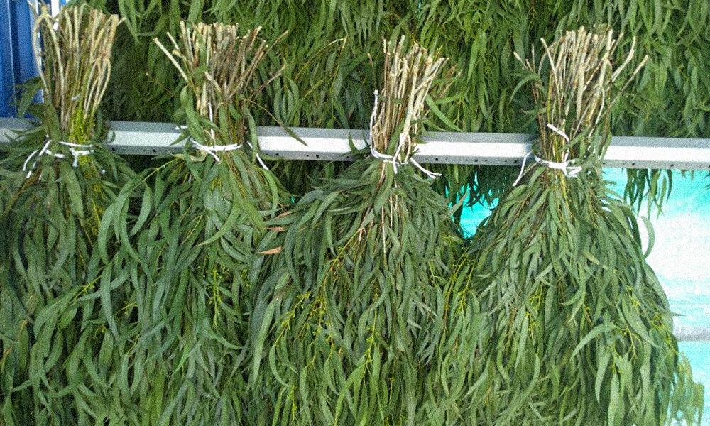 Как правильно запарить березовый веник для бани – проверенные способы
