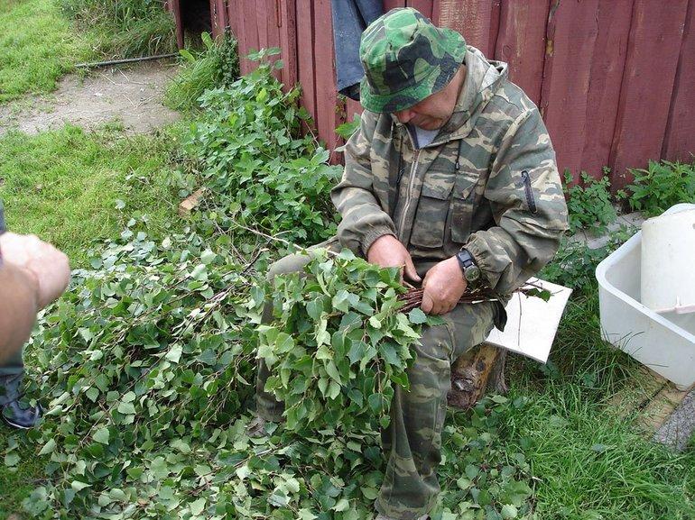 Когда заготавливают березовые, дубовые и липовые веники для бани: в какие сроки происходит заготовка веников