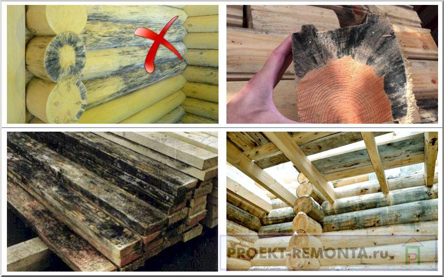 Чем вывести грибок в бане на полу и стенах   строительство. деревянные и др. материалы
