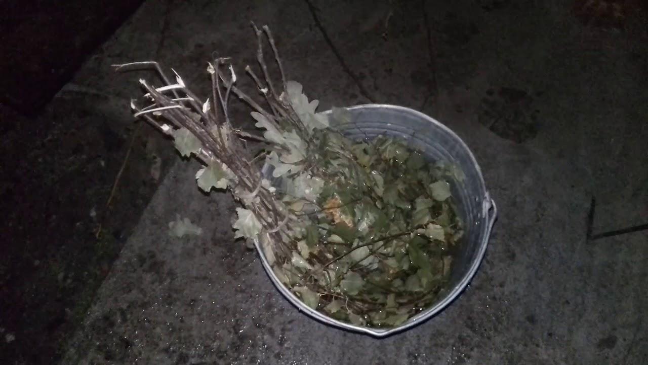 Как запарить веник из березы для бани? как заваривать или замачивать сухой веник из березы в воде первый раз? советы и рекомендации