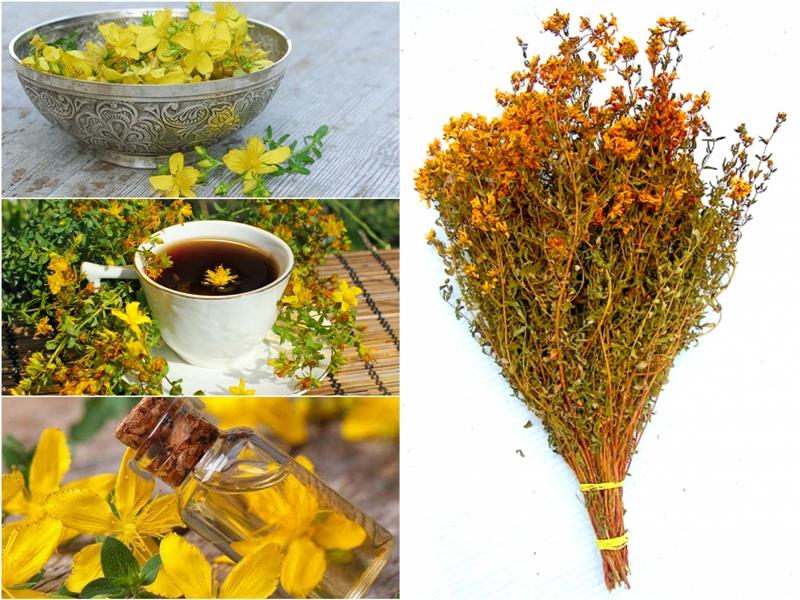 Травы для бани – целебный пар для вашего здоровья