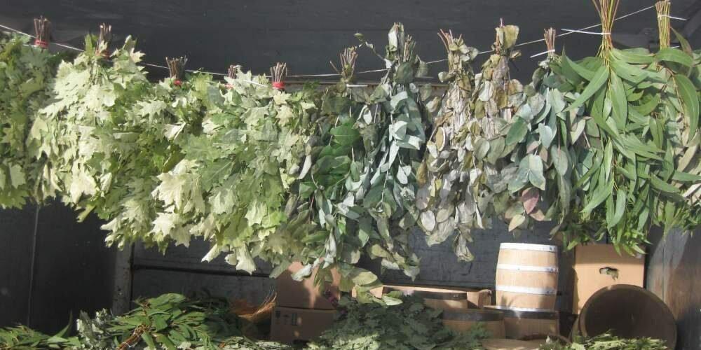 Когда и как заготавливают березовые веники для бани