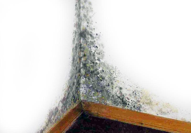 6 способов, которые помогут вам избавиться от грибка на стенах вашей квартиры: 50 фото и 1 видео