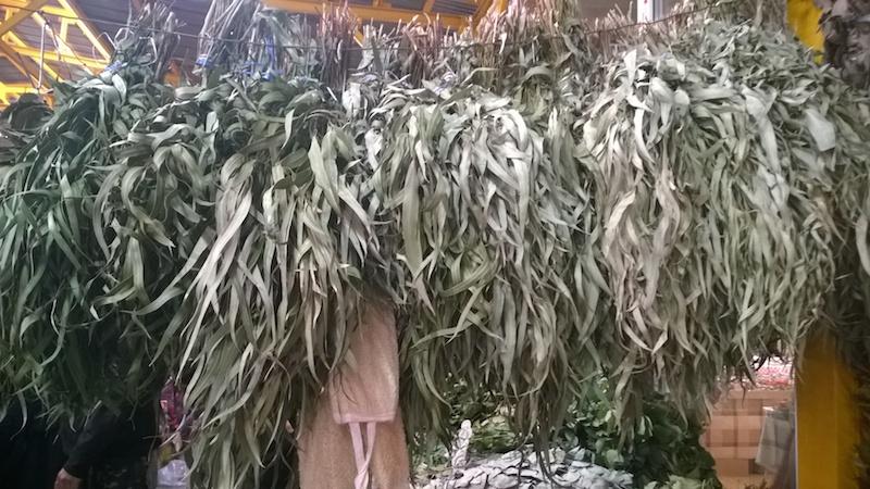 Эвкалиптовый веник для бани: все свойства далёкого иностранца