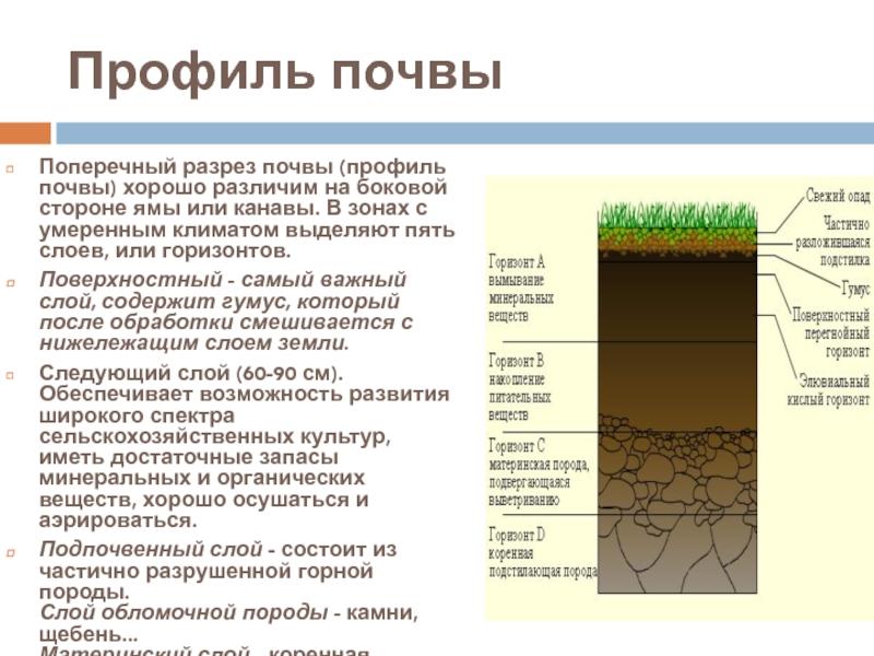 Суглинистая почва – самый плодородный вид грунта | огородники