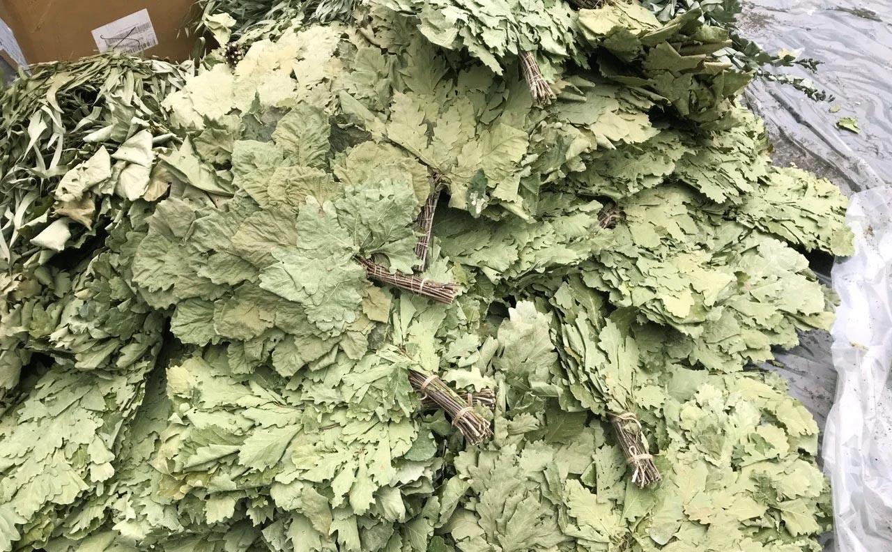 Как правильно запаривать дубовый веник для бани? в какой воде можно замочить и запарить сухой веник? как подготовить сырье?