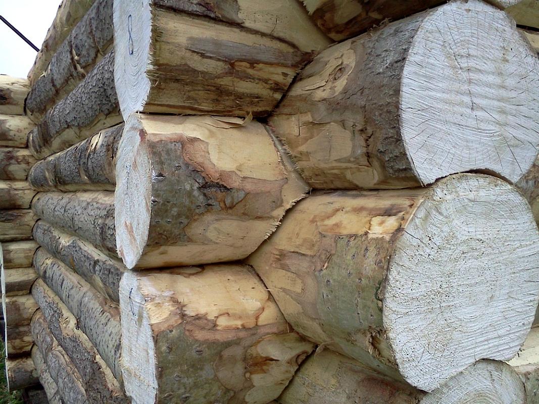 Лучшее дерево для строительства дома — основы выбора