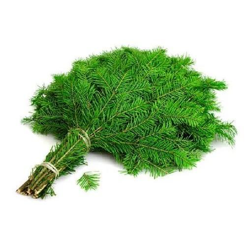 Веники и травы для бани хорошего качества - в minba.ru