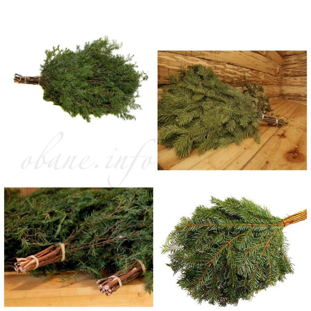 Пихтовый веник для бани - свойства, применение