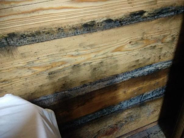 Обработка бани от плесени и грибка: как избавиться, средство для дерева