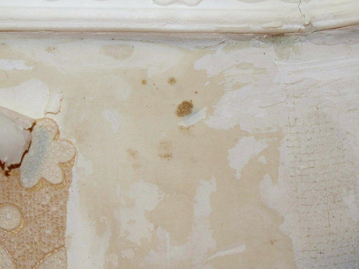 Антигрибковое средство для стен: сравнительный обзор лучших вариантов